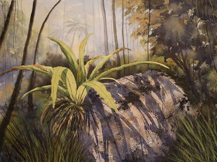 Bird's Nest Fern 30cm x 40cm. Available