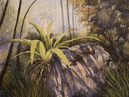 Bird's Nest Fern 30cm x 40cm. Available