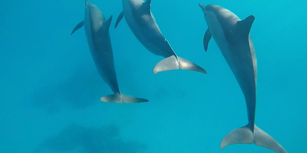 Passer l'an avec les dauphins de Sataya.