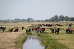 Opfok De Burd