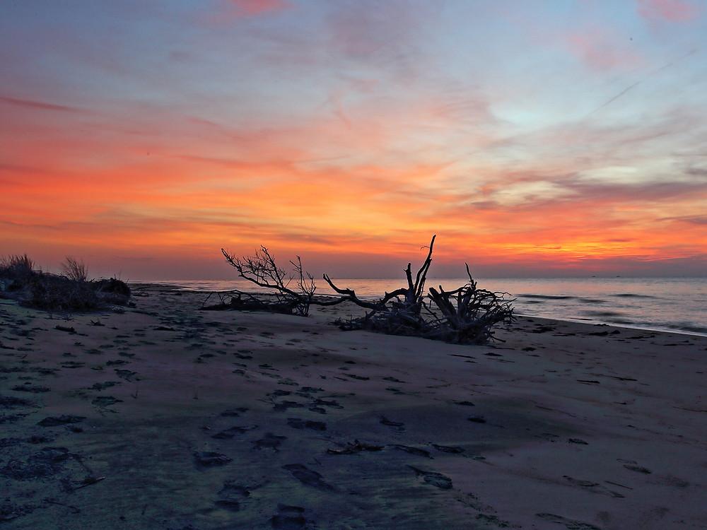 Cape Charles Natural Area Preserve, Eastern Shore, Virginia