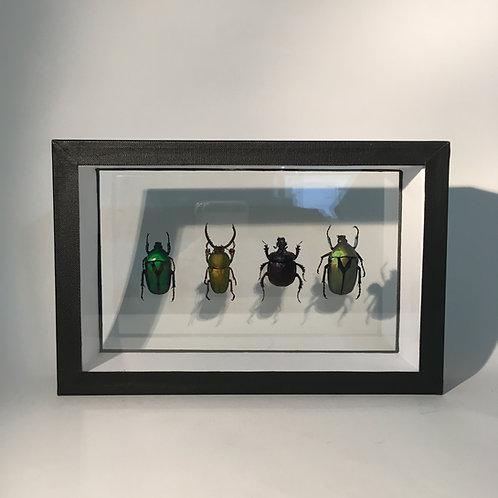 Quattuor de coléoptères
