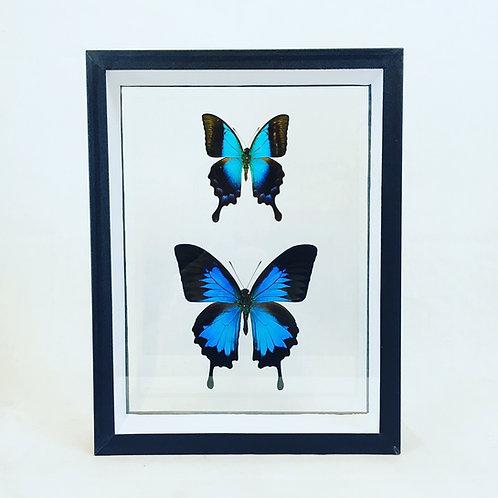 Duo bleu et noir