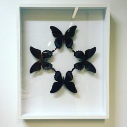 Papilio askalaphus sous cadre 40x50cm