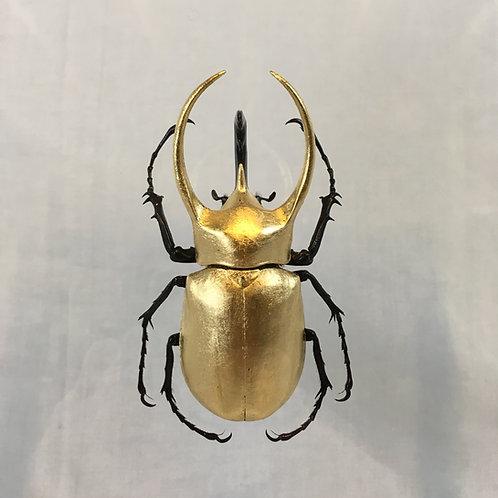 Chalcosoma atlas doré