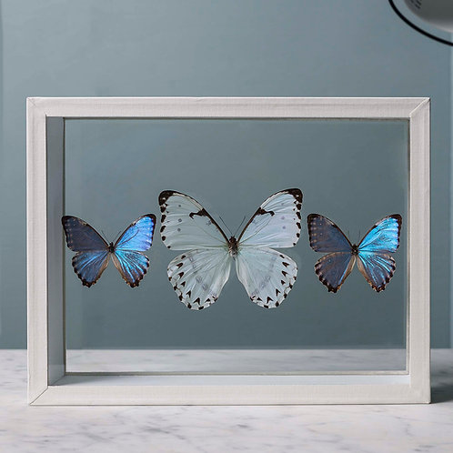 Trio morpho bleu et blanc