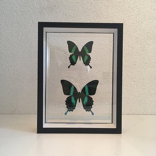 Duo vert et noir sous cadre