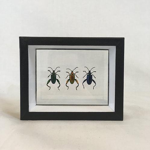 Trio de Chrysomelidae