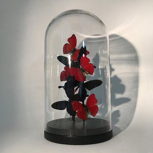 Envolée noire et rouge sous dôme 28cm