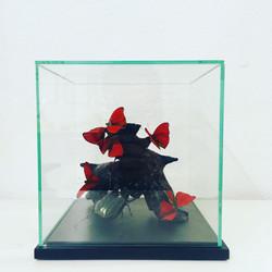Papillons sur souche