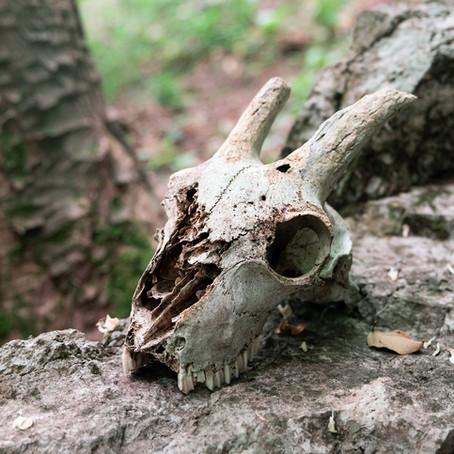 Memento mori, 3 canzoni che parlano di morte - Top of the Shots