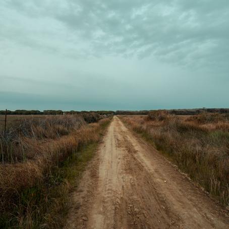Maremma amara: 4 canzoni dalla terra aspra - Top of the Shots