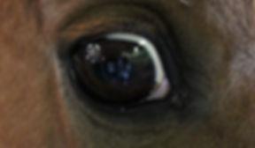 Jimmy's eye.jpg
