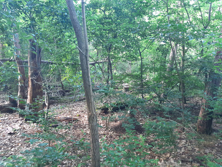ABGESAGT: Waldbegehung mit Herrn Gramlich (NABU) am 4. Juli 2020