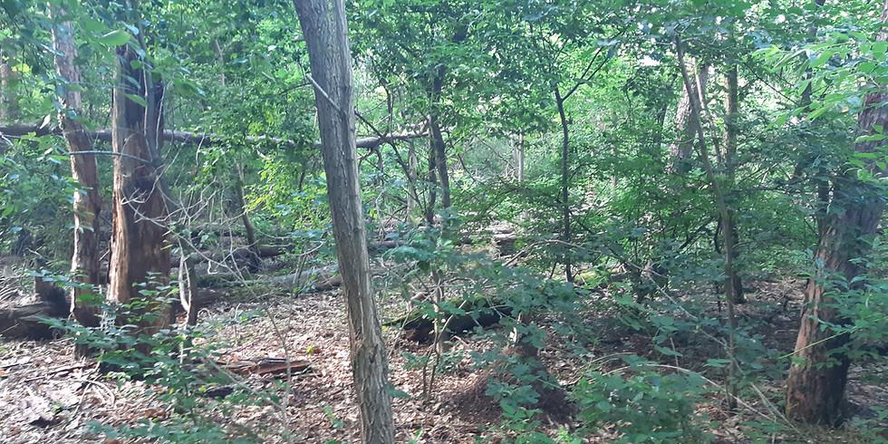 Waldbegehung mit Herrn Gramlich (NABU)