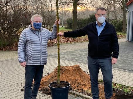 Birkenheide: Weihnachtsgeschenk an die Natur