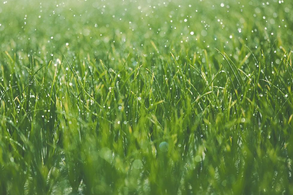 Wet%20grass_edited.jpg