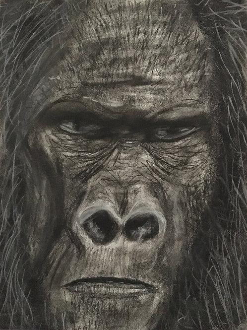 Skunk Ape, Charcoal Drawing