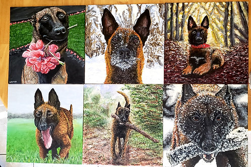 Malinois Collection