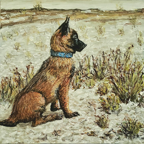 Malinois In Sand, Original Painting