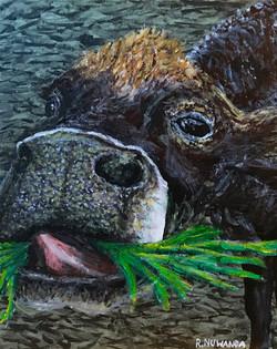 Kai The Cow