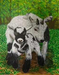 Goats Of Wishing Well Sanctuary