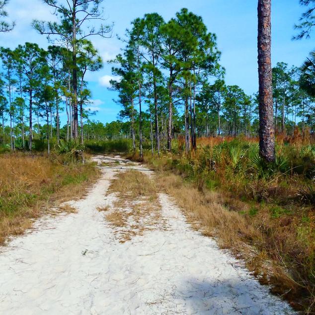 One Trail.