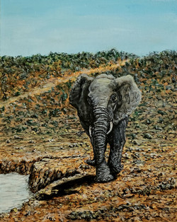 Elephant By Water Hole