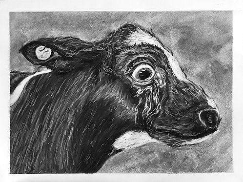 SOLD. The Cow Asks Why?, Original Charcoal