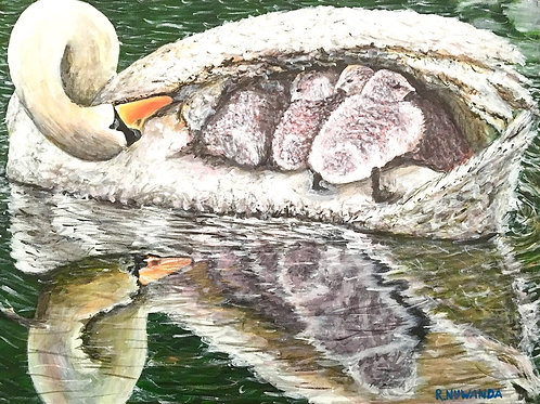 Mothering Swan, Original Painting