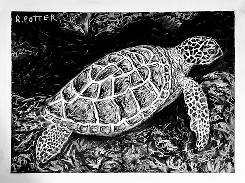 The Turtle Searches, Original Charcoal