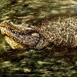 Alligator Mating Call