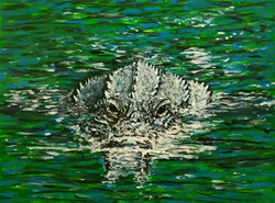 Alligator Swimming