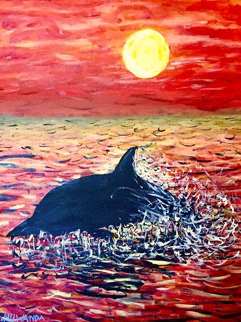 Dolphin Sun Tan