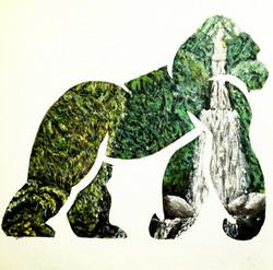 Rainforest Window