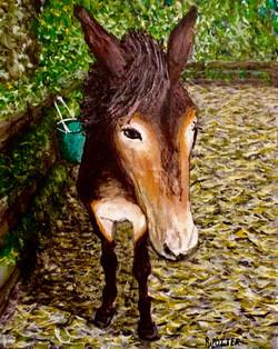 Leroy The Mule