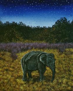 Elephant In Moonlight