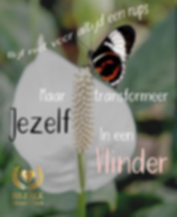 vlinder_lifestyle.png