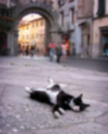cat sleeping.jpg