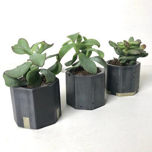 3 black mini succulent plant pots