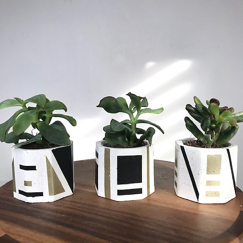 3 white mini succulent plant pots (black/gold)
