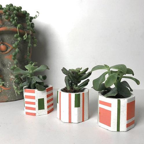 3 white mini succulent plant pots (orange/green)