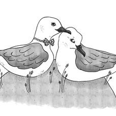 Mutton Birds