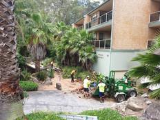 Garden Maintenance: Tree Removal