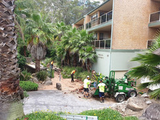 Garden Maintenance: Tree Removal