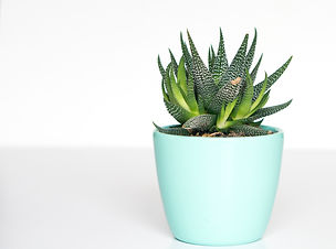 green%20succulent%20in%20teal%20ceramic%