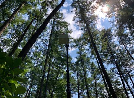 森の祭り=林業