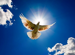 doves flying.webp