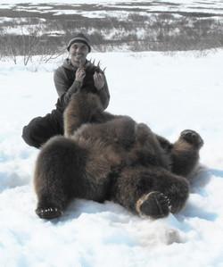 Huge Alaska Brown Bear