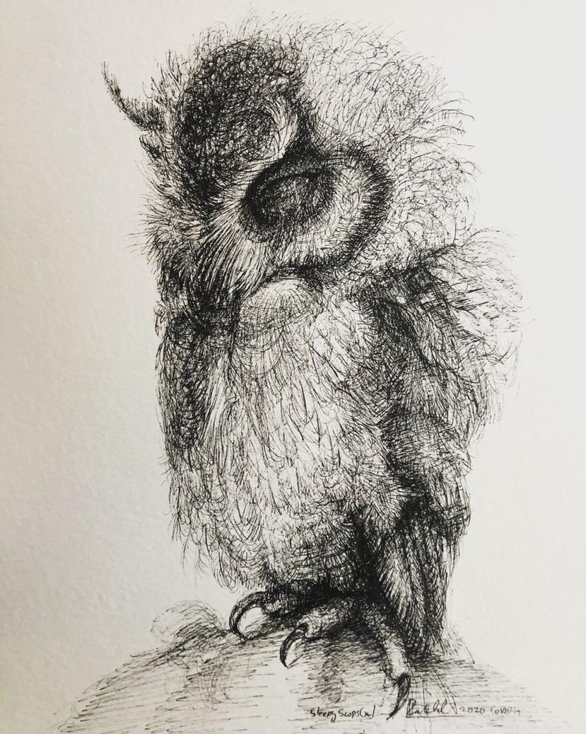 Sleepy Scops Owl